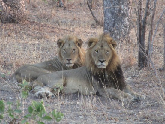 Jock Safari Lodge Aufnahme