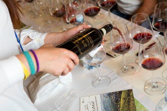 Castiglione Falletto, İtalya: Wine Tasting Experience