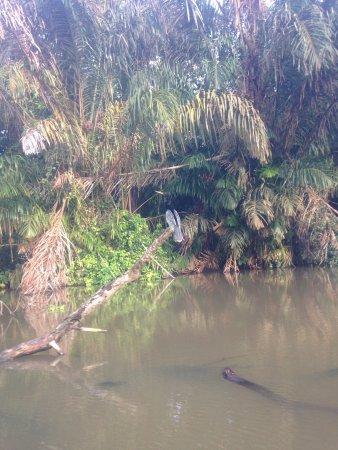 Tortuguero, Kosta Rika: Canoe tour
