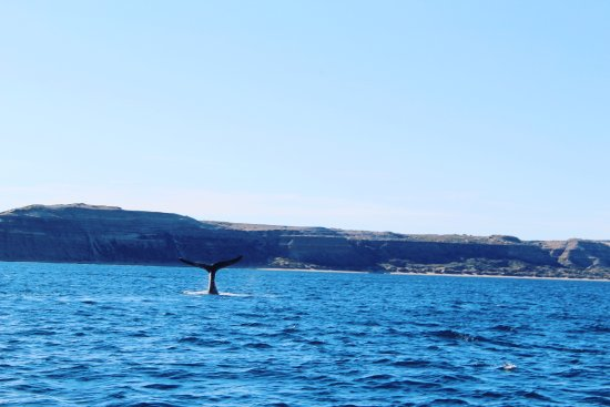 Whales Argentina : Una de las mejores vistas del barco!