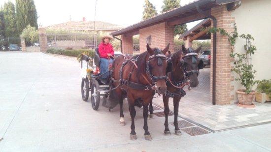 Montefalco, Ιταλία: Giornata in carrozza con visita e degustazione in cantina