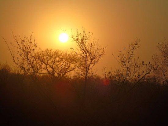 Skukuza Rest Camp: Morning drive