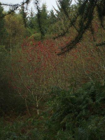 Mold, UK: Beautiful Moel Famau