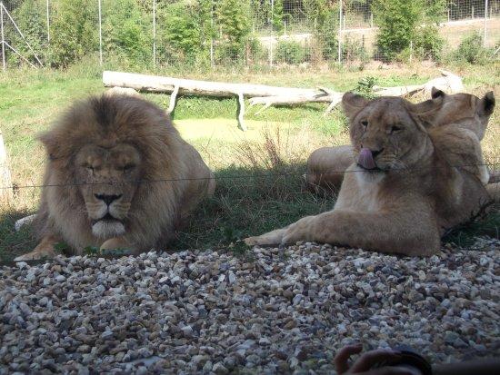 Hermival-les-Vaux, Francia: Les lions