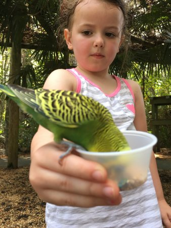 Wild Adventures Theme Park: Birds literally will land on you! Our daughter was super excited about this!