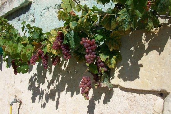 Charnizay, Francia: La treille