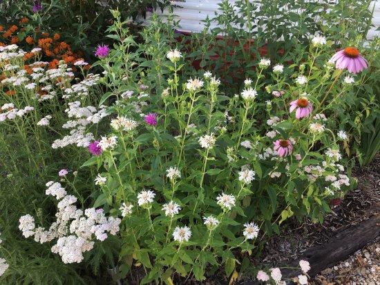 Annapolis, MO: Butterfly & Hummingbird Garden