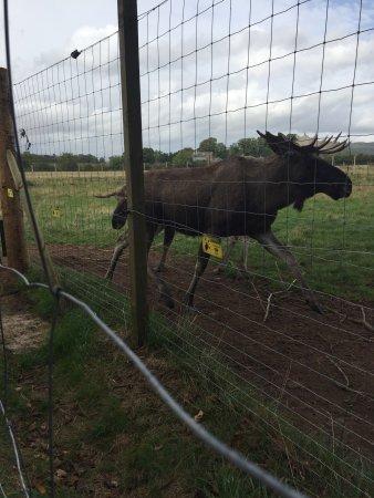 Cupar, UK: The Scottish Deer Centre