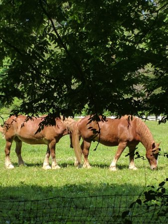 Walland, TN: Beautiful horses along the path we cruised in the gulf cart!
