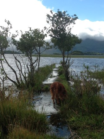Killarney Guided Walks: Rua