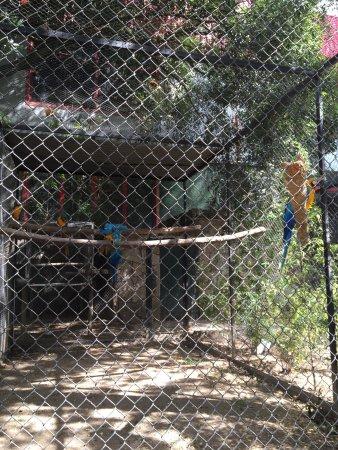 Maia, البرتغال: 地元の方向けローカルな動物園