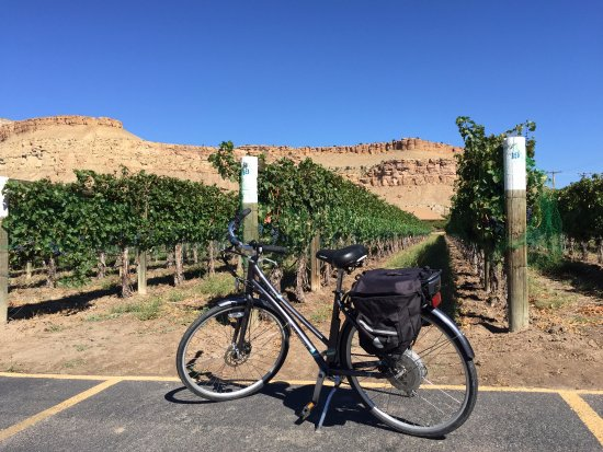 ‪‪Palisade‬, ‪Colorado‬: Electric bike near a vineyard‬