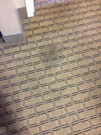 Quality Inn & Suites Near Fairgrounds Ybor City: photo0.jpg