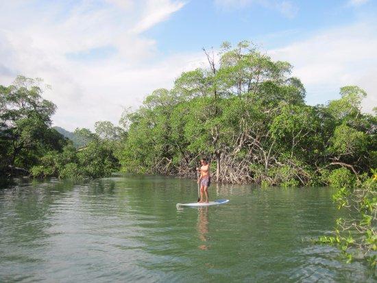 Tonosi, Panama: getting in the mangroves