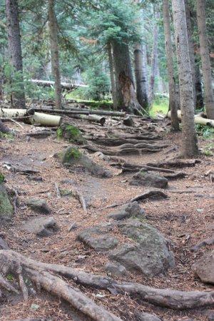 Humphrey's Peak Trail - San Francisco Peaks: Some of the terrain you'll be hiking on