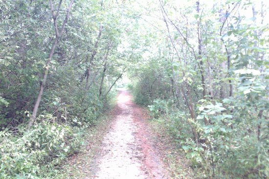 Fischer Creek State Recreation Area: trail to the beach