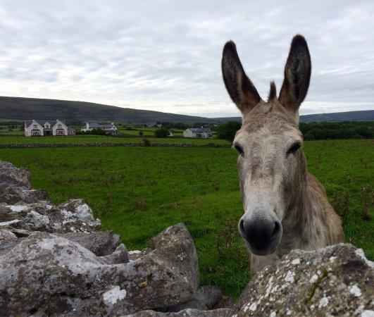 Ballyvaughan, Ιρλανδία: Ces photos sont des détails de l'environnement proche de ce lodge très agréable 😉
