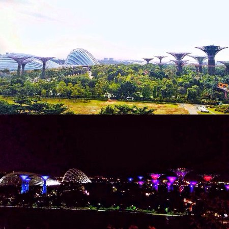 Garden By The Bay At Night gardenthe bay's morning and night view from mbs - picture of