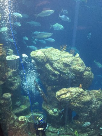 Picture Of South Carolina Aquarium