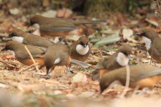 Pangot, India: very nice birds around the amenities