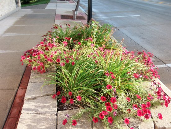 Mayville, WI: Main Street is dotted with flower potts, trees and iron benches
