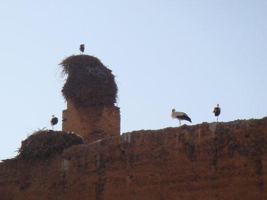 Riad Alegria Photo