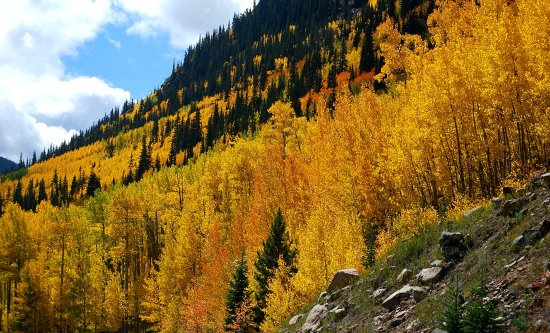 Georgetown, CO: Guanella Pass colors