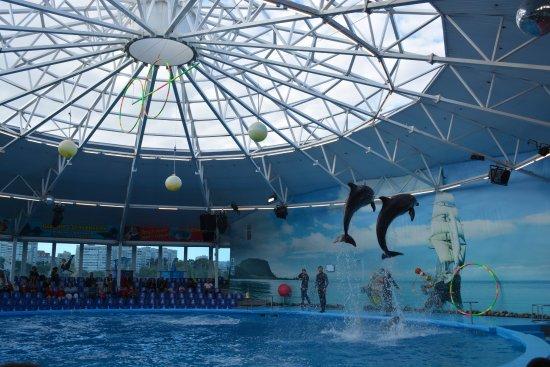 Minsk Dolphinarium Nemo