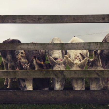 The Isle of Wight Donkey Sanctuary : photo0.jpg