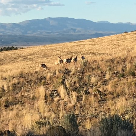 AmericanATVRentals.com - Antelope herd on the route from Panguitch to Hatch