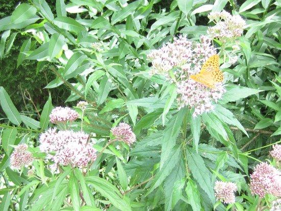 Wild Herbs Garden Haimburger