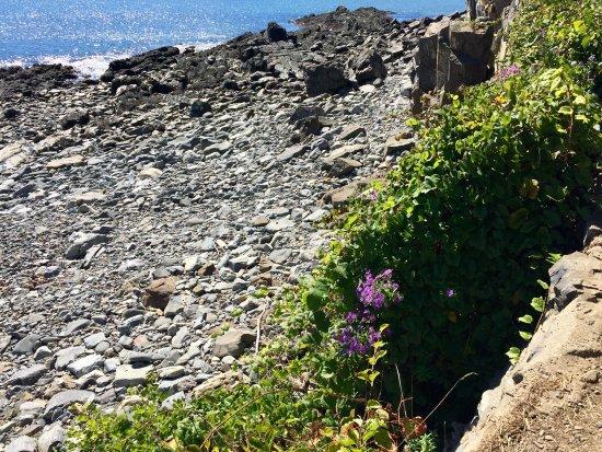 York Harbor, ME: Lovely Cliff walk in York