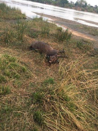写真セルース猟獣保護区枚