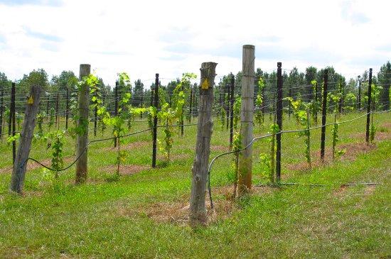 SilkHope Winery
