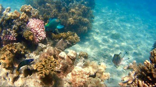 S.V. Domino: Bali Hai Reef