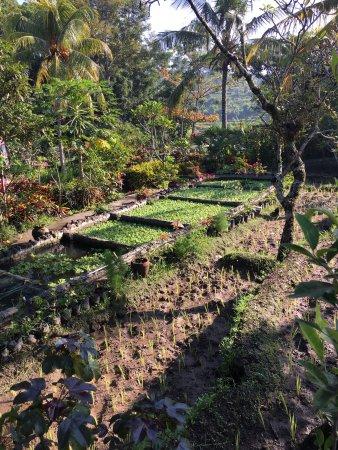 Subak Tabola Villa: photo7.jpg
