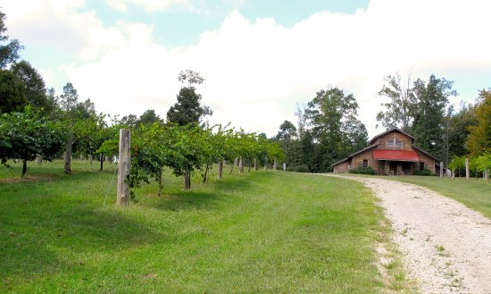 Snow Camp, NC: Vineyard & Tasting Room at Wolfe Wines