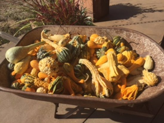 Carlton, Όρεγκον: Fall squash grown on the Mineral Springs Ranch