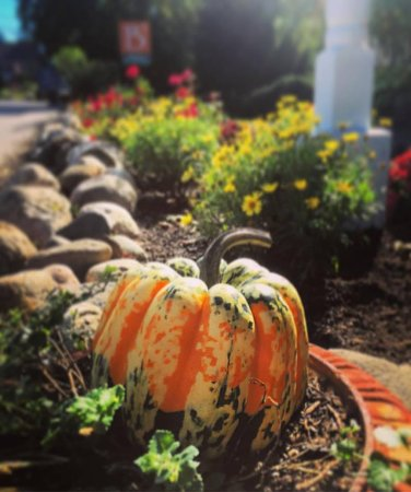Bourne Bed & Breakfast: fall at B3