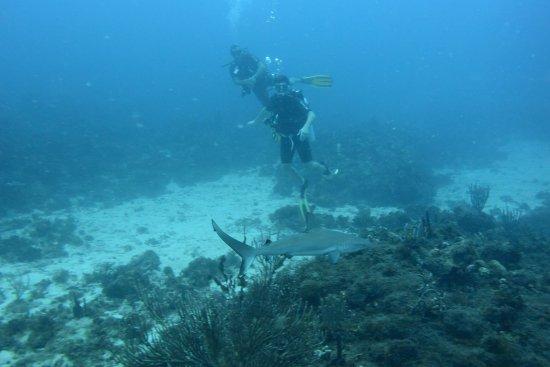 Grand Case, St. Maarten: Plongée à Chico 1, près de Tintamarre