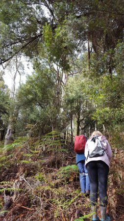 King Island, ออสเตรเลีย: Heading back up the hill to the car