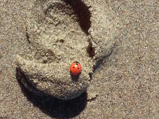 Image result for ladybugs on beach