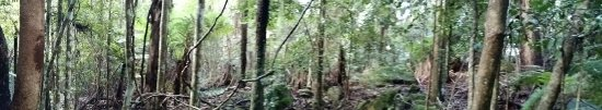 Katoomba, Australia: Walking through the Blue Mountains (the view)