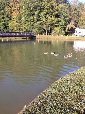 Brevard, Carolina del Norte: ducks at fishing pond