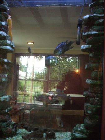 Quarryville, PA: Wall Aquarium.