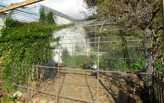 Orford, Austrália: Our Chicken coop from where our tasty organic breakfast eggs come from