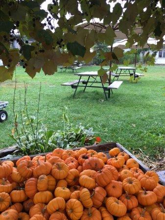 Sharon, ماساتشوستس: Mini pumpkins and more outdoor seating