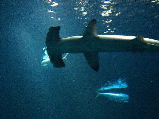 Monterey Bay Aquarium: photo6.jpg