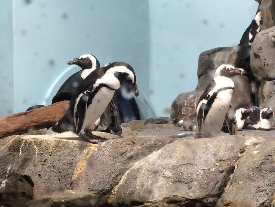 Monterey Bay Aquarium: photo7.jpg