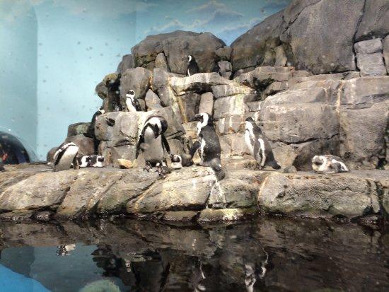 Monterey Bay Aquarium: photo9.jpg